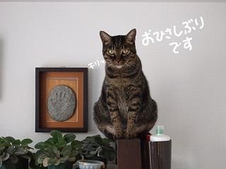 kaisho1-2.jpg