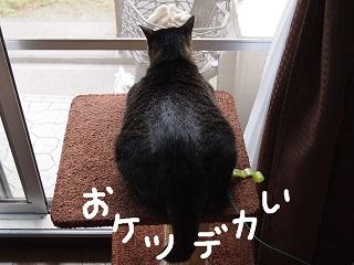 kaisho10-2.jpg