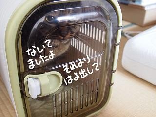 kaisho2-3.jpg