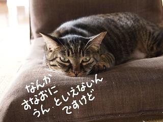 kaisho8-2.jpg