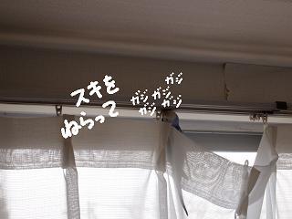 kajiri6-2.jpg
