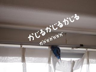 kajiri7-2.jpg