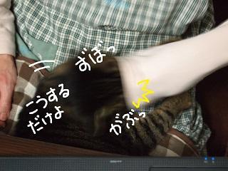 kamima4-2.jpg