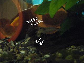 karusiumu-2.jpg