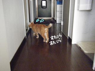 kedama6-2.jpg