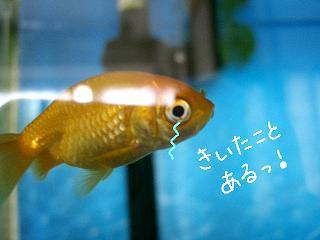 kiitakoto-2.jpg