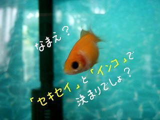 kimari-2.jpg