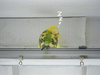 lemon8-2.jpg