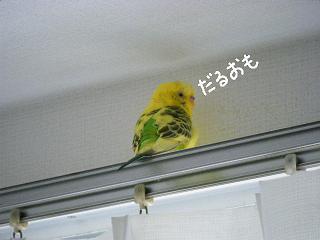 lemon9-2.jpg