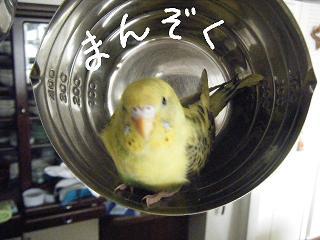 lemonmanzoku-2.jpg