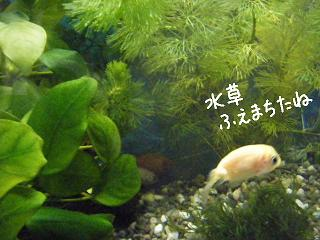 mizukusafueta-2.jpg