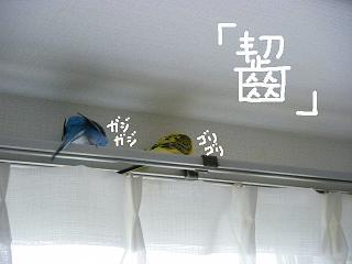 moji7.jpg