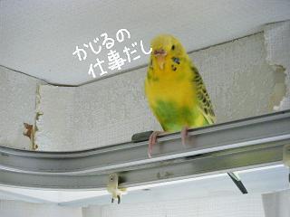 moji8.jpg