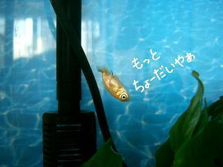 mottocho-dai-2.jpg