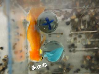 nai8-2.jpg