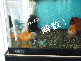 nakama4-2.jpg