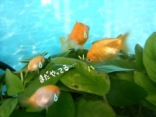 nanamada-2.jpg