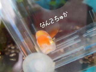 naname3-2.jpg