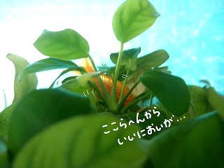 nanapuku-2.jpg
