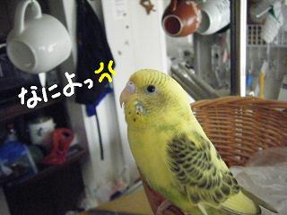 naniyo-2.jpg