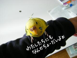 nankacho-dai-2.jpg