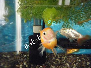 nayami2-2.jpg