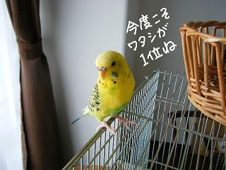 ninki7-2.jpg