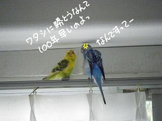 ninki9-4.jpg