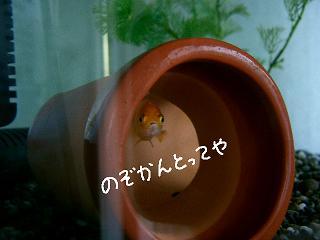 nozokanntotte-2.jpg