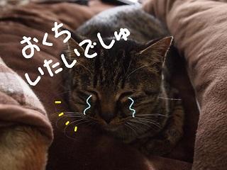okurimono5-2.jpg