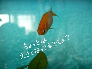 ookiku-2.jpg