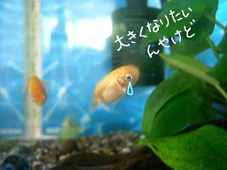 ookikunaritai-2.jpg