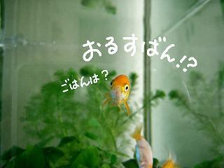orusuban-2.jpg