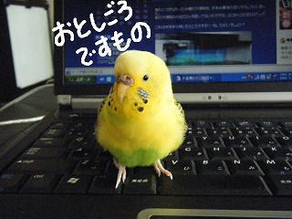 otosigoro-2.jpg