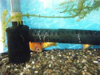sasurai4-2.jpg