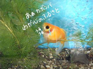 sasurai7-2.jpg