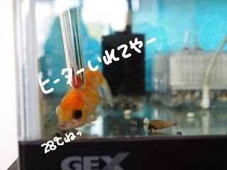 siawase11-2.jpg