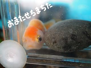 siawase4-2.jpg