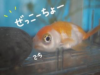 siawase6-2.jpg