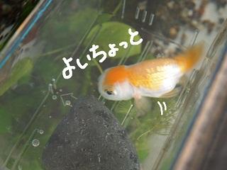 siawase8-2.jpg