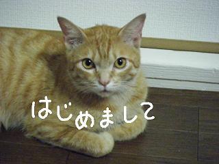 siniri3-2.jpg