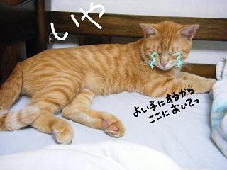 siniri7-3.jpg