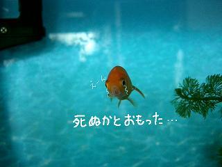 sinukato-2.jpg