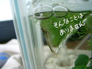 sonnakoto-2.jpg