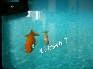 soudechuka-2.jpg