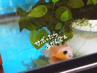 taijyu-5-2.jpg