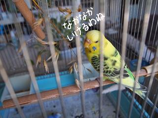 tanjyo-bi5-2.jpg