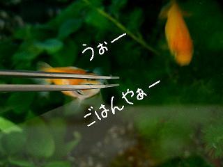 uo-2.jpg