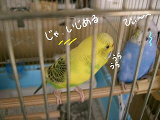 uraura-2.jpg