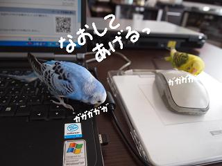 uroko2-2.jpg